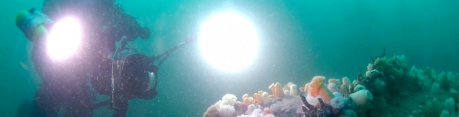 Hollandse onderwaterfilm onderschat